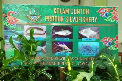 Ikan Kancra atau Ikan Dewa