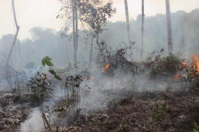 Hutan Indonesia, antara