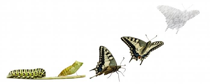 5 Pondasi Dasar Dalam Sebuah Transformasi