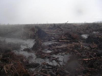 Tenggang Waktu untuk Mengatasi Deforestasi, Kabut Asap dan Upaya Konservasi