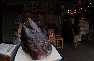 Pusingnya Menanggulangi Tikus di Pusat Ikan Tsukiji, Tokyo