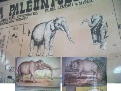 Ternyata Ada Gajah Kerdil Endemik Sulawesi di Soppeng
