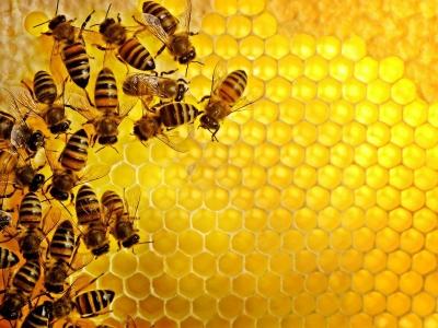 Bagaimana Cara Lebah Menghasilkan Madu
