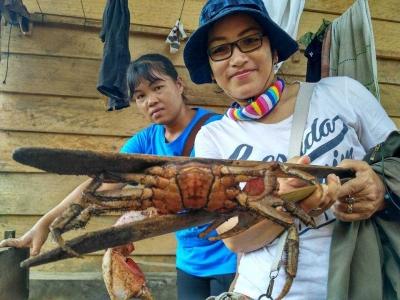 Mari Berburu Kepiting Endemik Mentawai dalam Festival Muanggau!