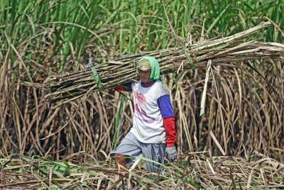 Mengubah Paradigma Membangun Pertanian