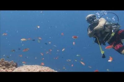 Membangunkan Hiu di Pulau Komodo