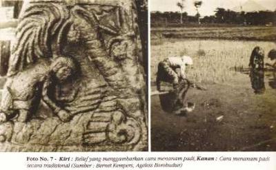 Mengapa Pertanian Pangan Kita Masih Seperti Zaman Borobudur