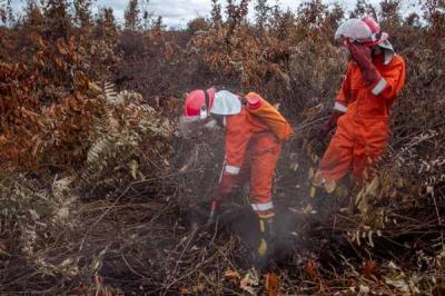 Ini Dia Tim Cegah Api Peduli Hutan Gambut yang Terancam di Ketapang