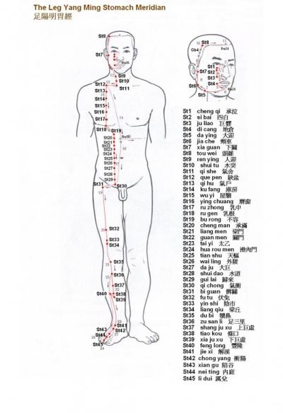 Belajar Akupuntur (Meridian Lambung)