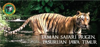 Taman Safari Prigen: Destinasi Wajib Para Pecinta Satwa