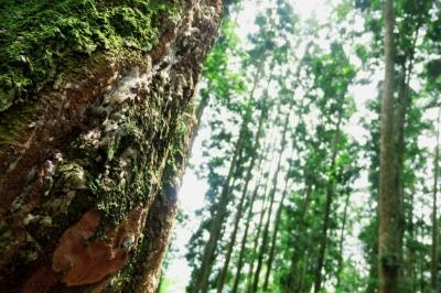 Wisata Cidahu, Perpaduan Air Terjun dan Hutan Pinus di Lereng Gunung Salak