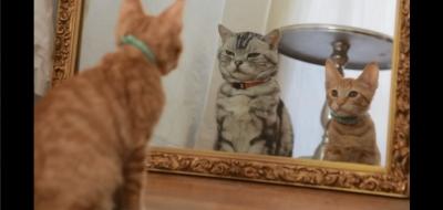 Dear Kitten, Branded Web Series yang Menggemaskan!