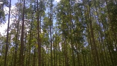 Arboretum Sinar Mas Forestry