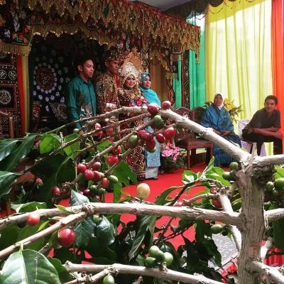 Wedding Party di Ladang Kopi, Suatu Trend Baru?