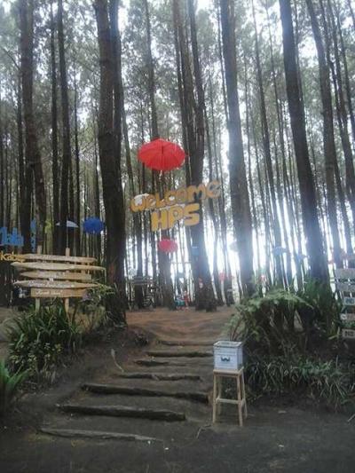 Ketika Hutan Pinus Tak Lagi Sekedar Hutan