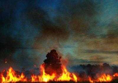 Perusakan Lingkungan di Era Jokowi