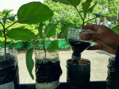 SD Negeri Gedongkiwo Tanamkan Pendidikan Karakter Melalui Program Hidroponik