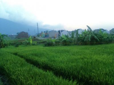 Investasi Perumahan Menggusur Lahan Pertanian