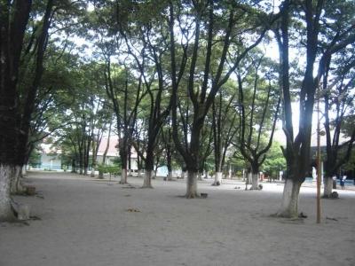 Cerpen | Kunti Pohon Sawo