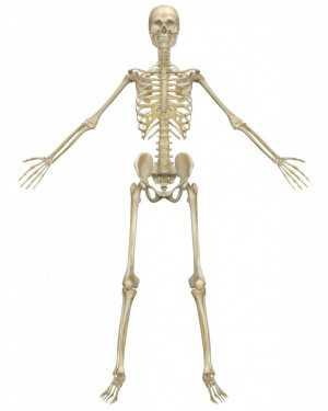 Ternyata Tulang Bisa Menghilang dari Tubuh!