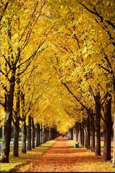 Oktober Emas di Jerman,
