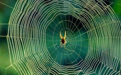 Bahkan Inspirasi Mendapat Laba bisa Datang dari Laba-laba