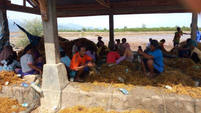 Dukungan BKIPM Bima terhadap Sektor Budidaya Rumput Laut Bima - Dompu