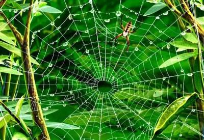Jaring Laba-laba yang Penuh Kebahagiaan