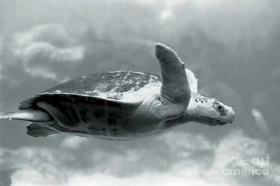 Cerita Lain tentang Kura-kura Terbang