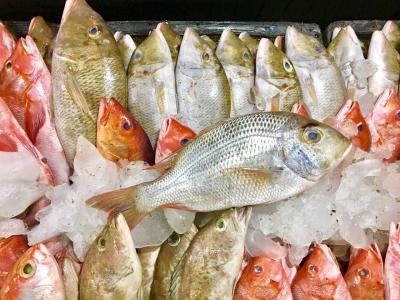 Festival Ikan di Kupang