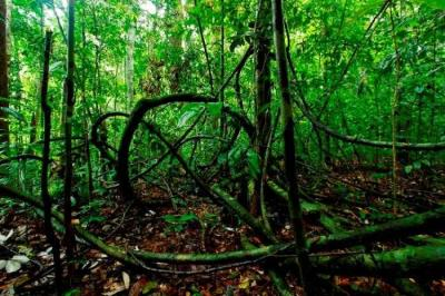 Mencari Pemimpin Daerah yang Pro Lingkungan, Bukan Perusak