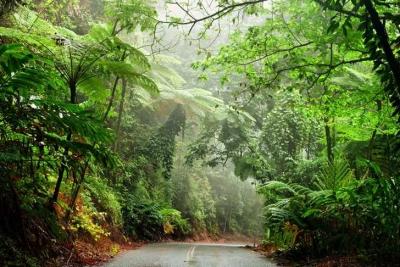 Membangun Sensitivitas terhadap Hutan