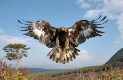 Lain Sisi: Lahirnya Kembali Sang Garuda