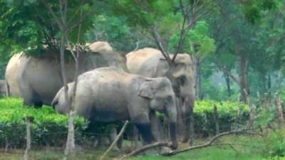 Pelajaran dari Konflik Gajah vs Manusia di India