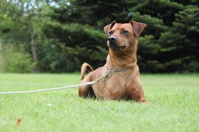 Wahai para Penuntun Anjing, Punguti Juga Kotoran Anjingmu