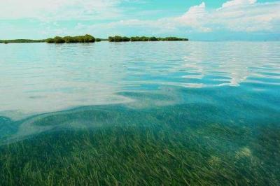 Ekosistem Padang Lamun Teluk Ambon Dalam Terancam