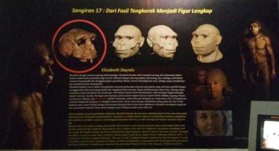 S17, Fosil Tengkorak