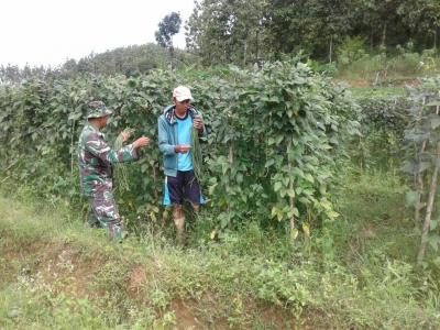 Bantu Petani Panen Hasil Bumi di Sektor TMMD Reg-101