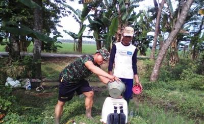 Babinsa Wonosalam Proaktif di Bidang Pertanian dalam Penanggulangan Hama