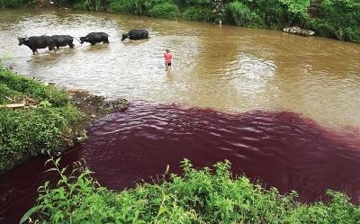 Akan Berhasilkah Revitalisasi Sungai Citarum?