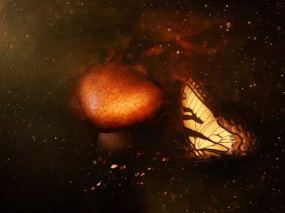 Kupu-kupu Memburu Kipas Angin