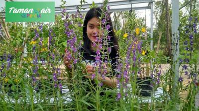 Ini Lima Lokasi Taman Bunga di Kota Medan, Nomor 5 Rekomendasi Banget!