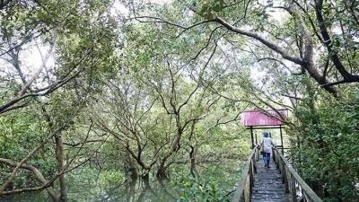 Menyusuri Hutan Bakau Margomulyo