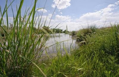 Peran Riparian sebagai Penahan Erosi Arus Sungai