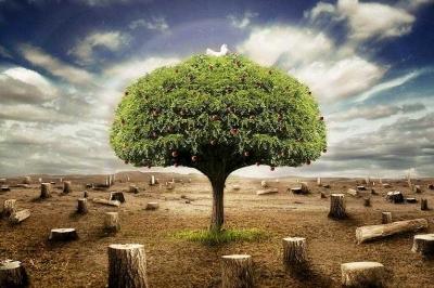 Bercermin pada Pohon