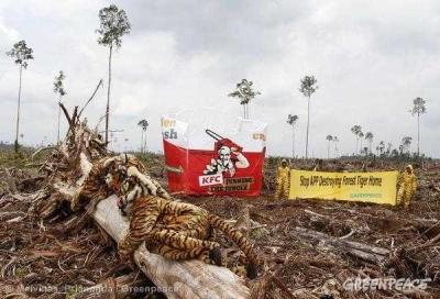 Deforestasi, Ancaman Keanekaragaman yang Semakin Nyata
