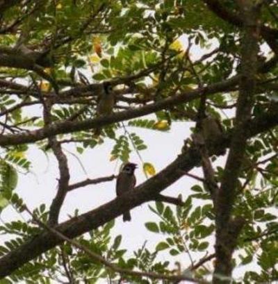 Burung Tinggal di Alam Sutera, Kapan Anda Tinggal di Apartemen Lloyd Alam Sutera?