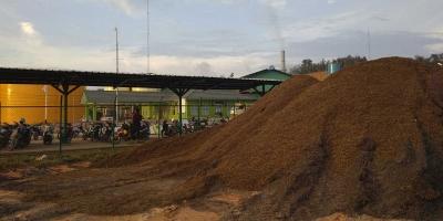 Cangkang Sawit, Sumber Energi Baru yang Berkelanjutan
