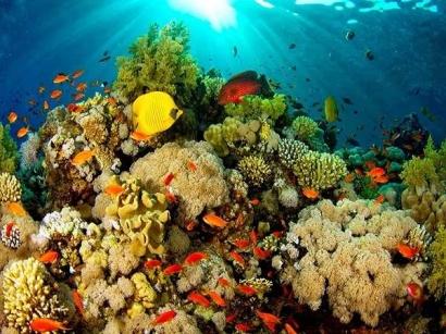 Coral Bleaching: Karena yang Putih tak Selamanya Indah