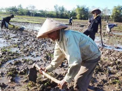 Menyelisik Kembali Budaya Batale Mencangkul Sawah dalam Masyarakat Desa Seleman Kecamatan Danau Kerinci